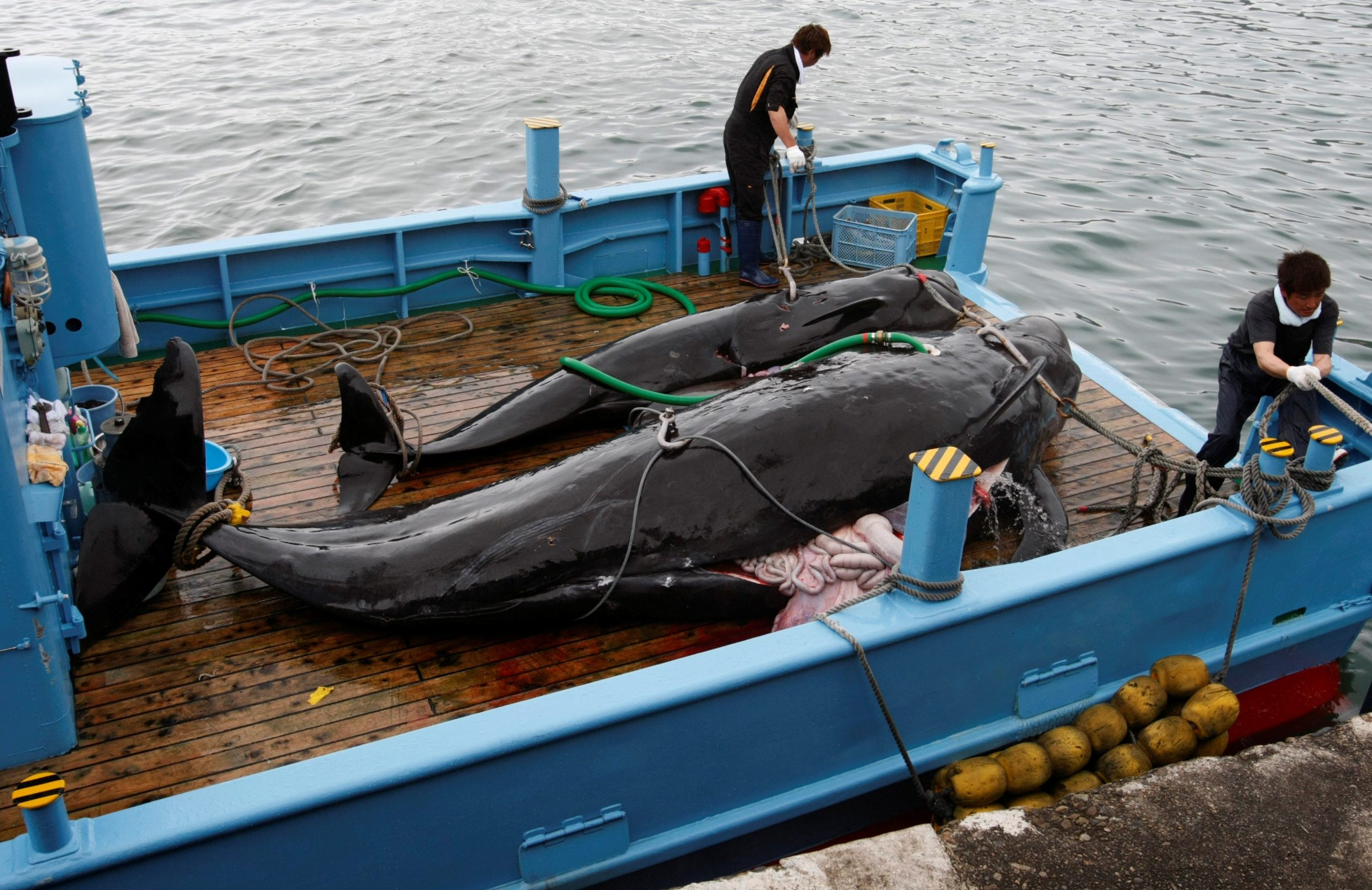 2019-06-24T001626Z_941857567_RC1FD33F1A50_RTRMADP_3_JAPAN-WHALING-DEFIANCE