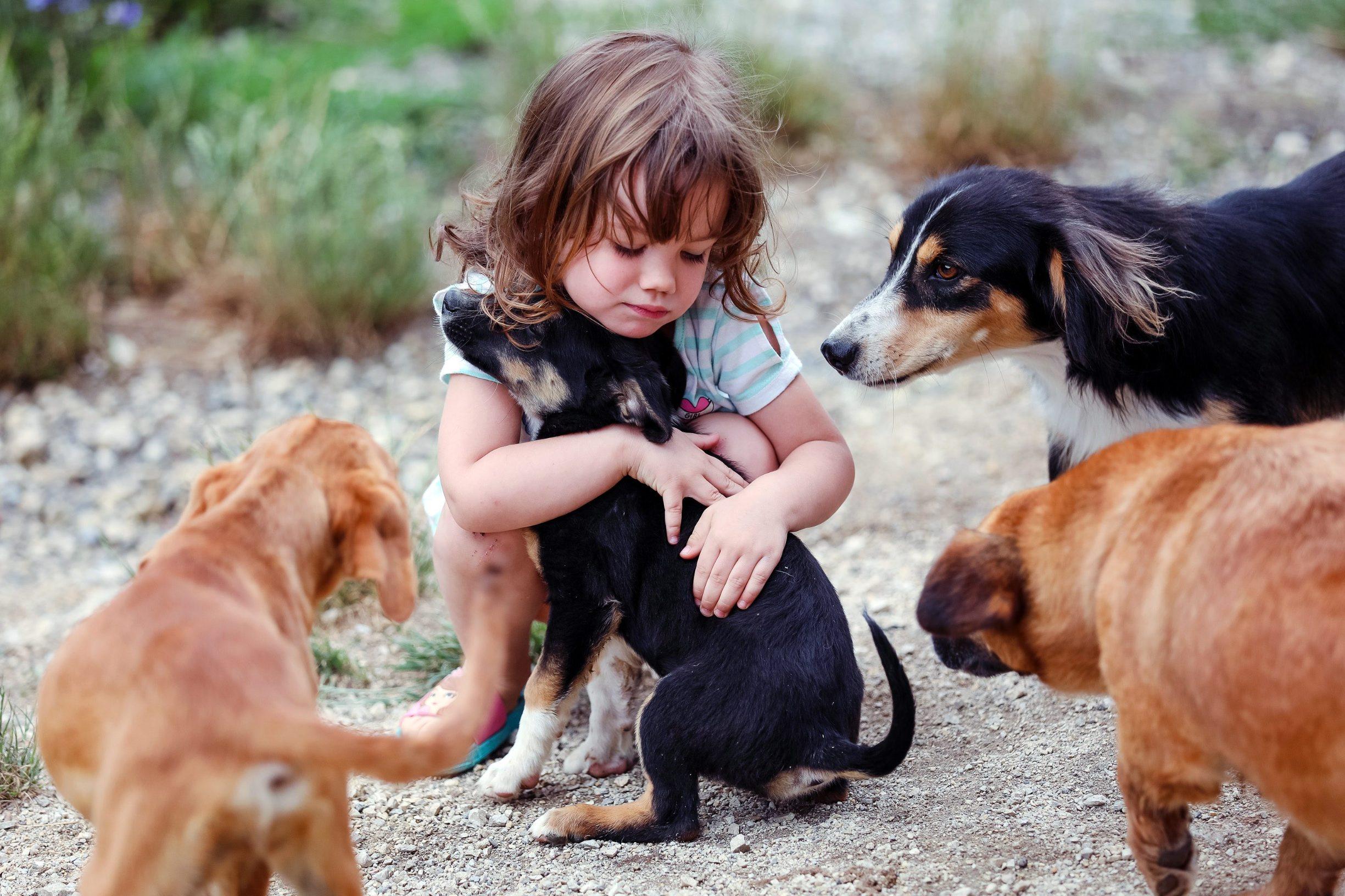 Mala Mila i dio pasa koje imaju na skrbi
