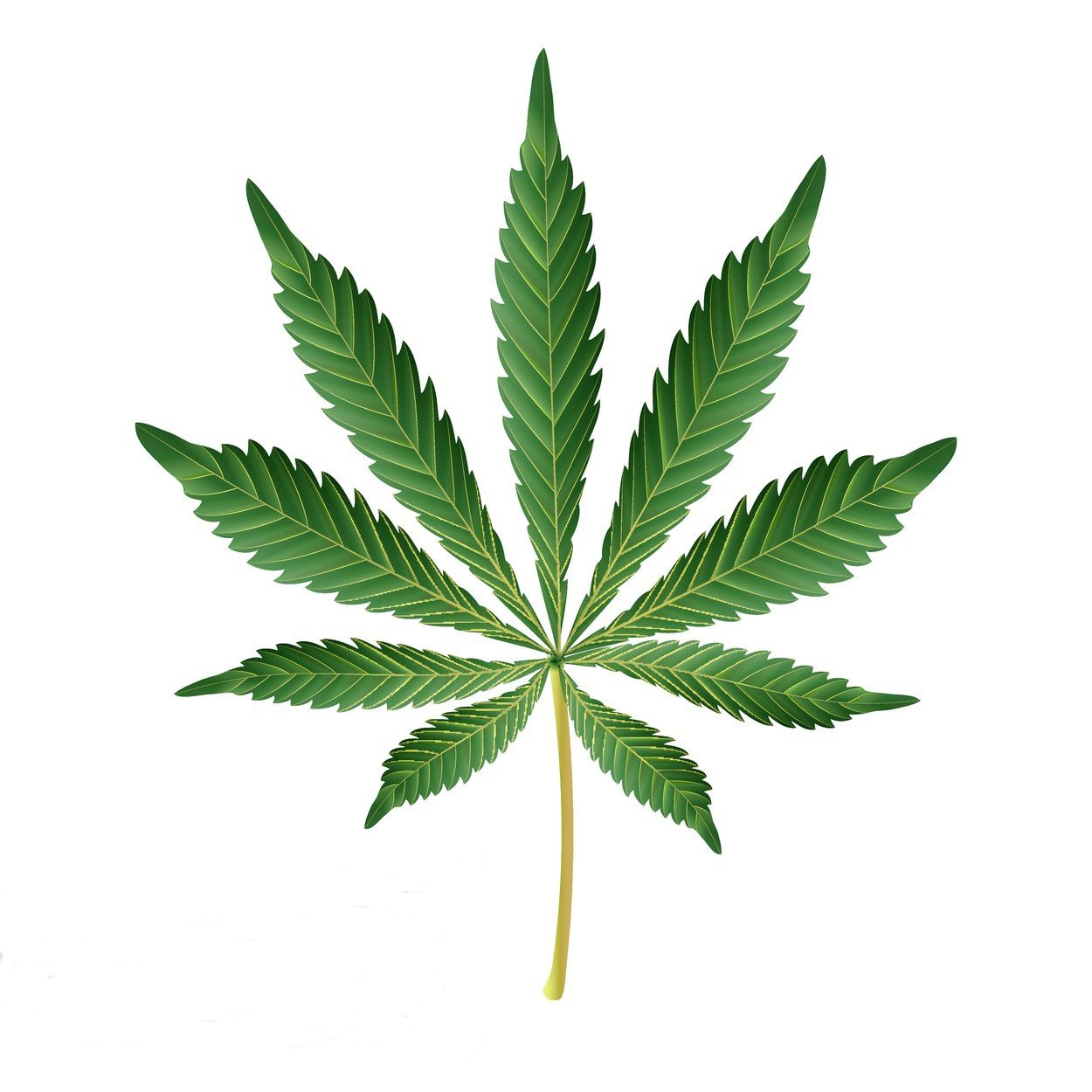 Cannabis Icon Vector. Medical Green Plant Illustration Isolated On White Background. Graphic Design Element For Printables, Web, Prints, Image: 340494944, License: Royalty-free, Restrictions: , Model Release: no, Credit line: Profimedia, Alamy