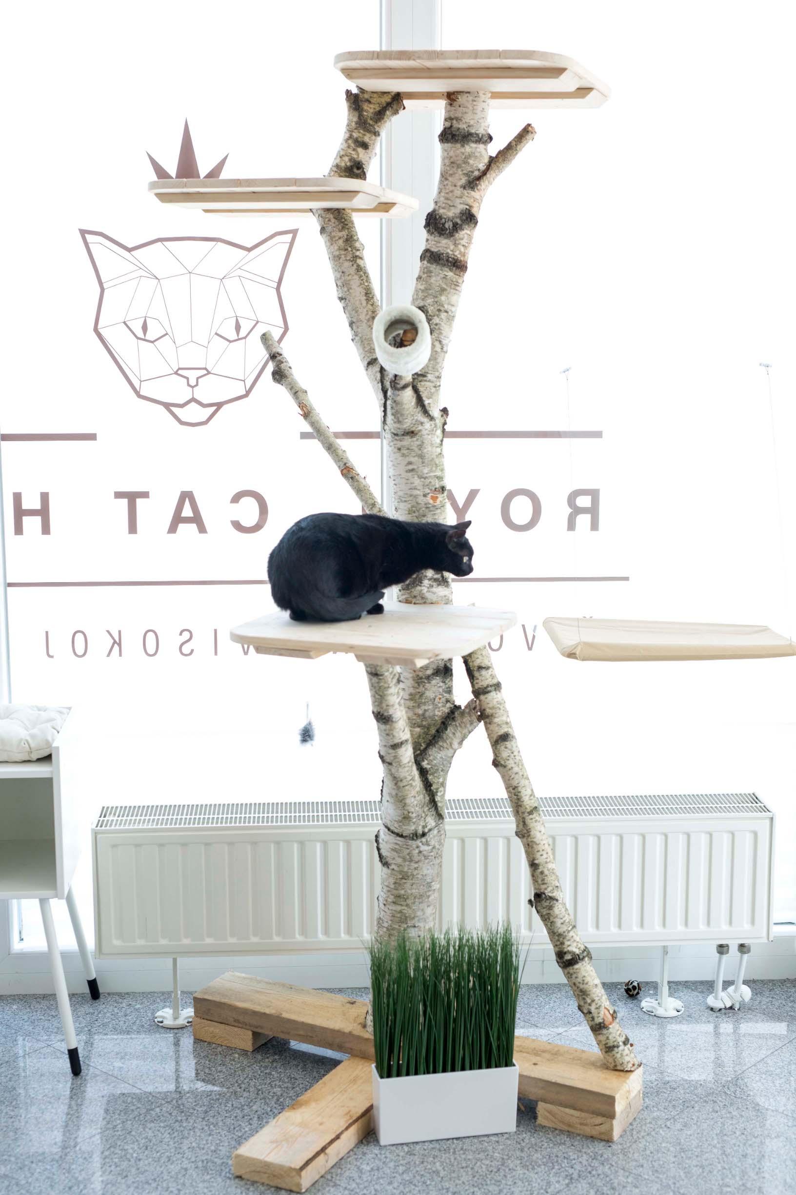 Hotel za macke  Ivana Kindl  Royal Cat Hotel  Dugo selo Fotograf Matej Dokic 130619