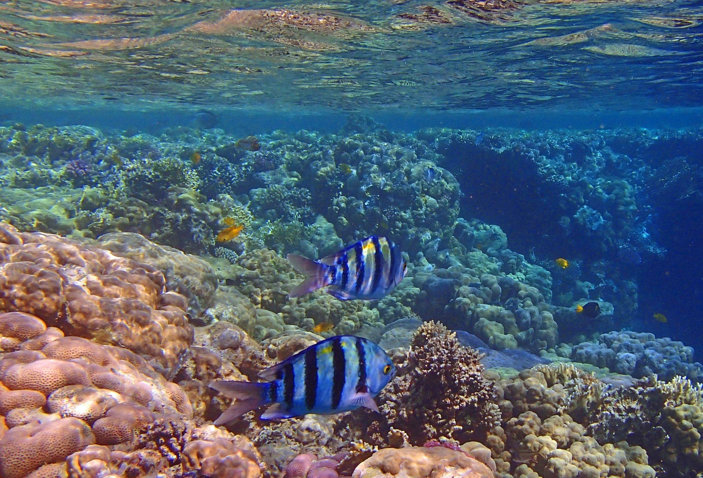 Podmorje Crvenog mora