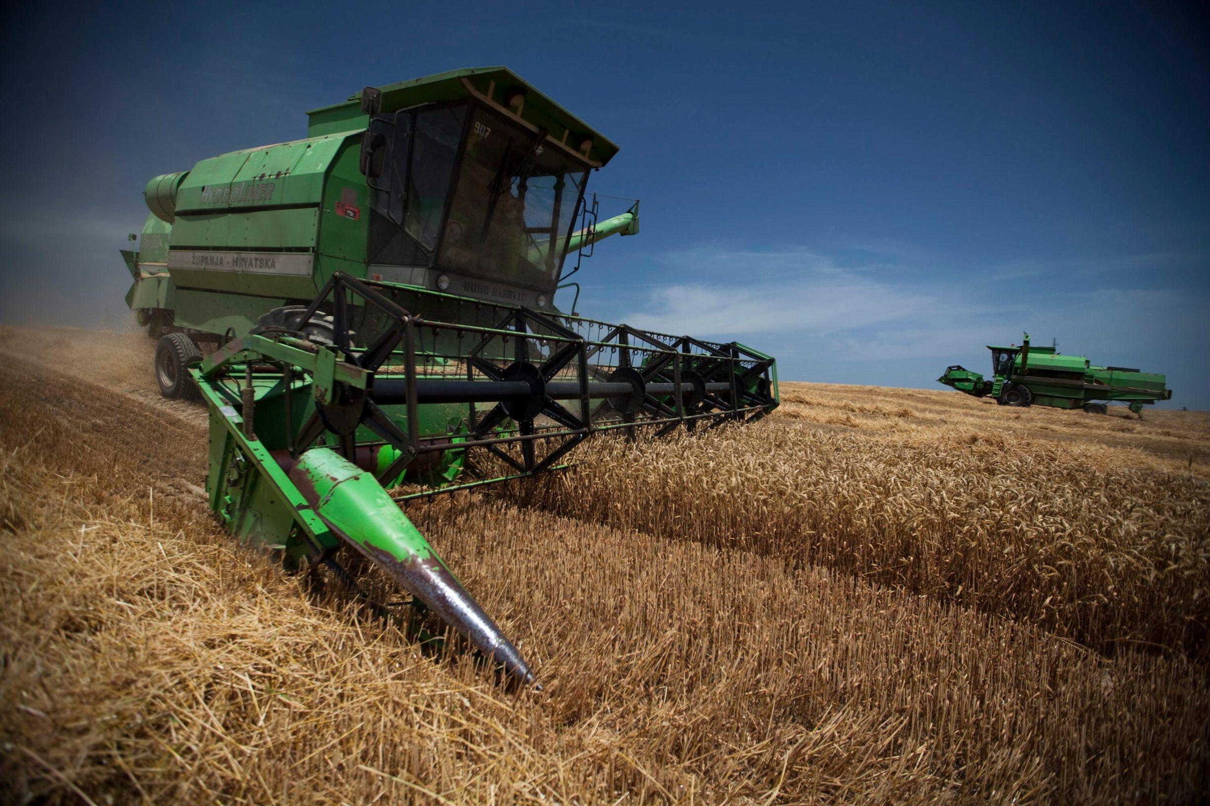 Žetva pšenice u Slavoniji