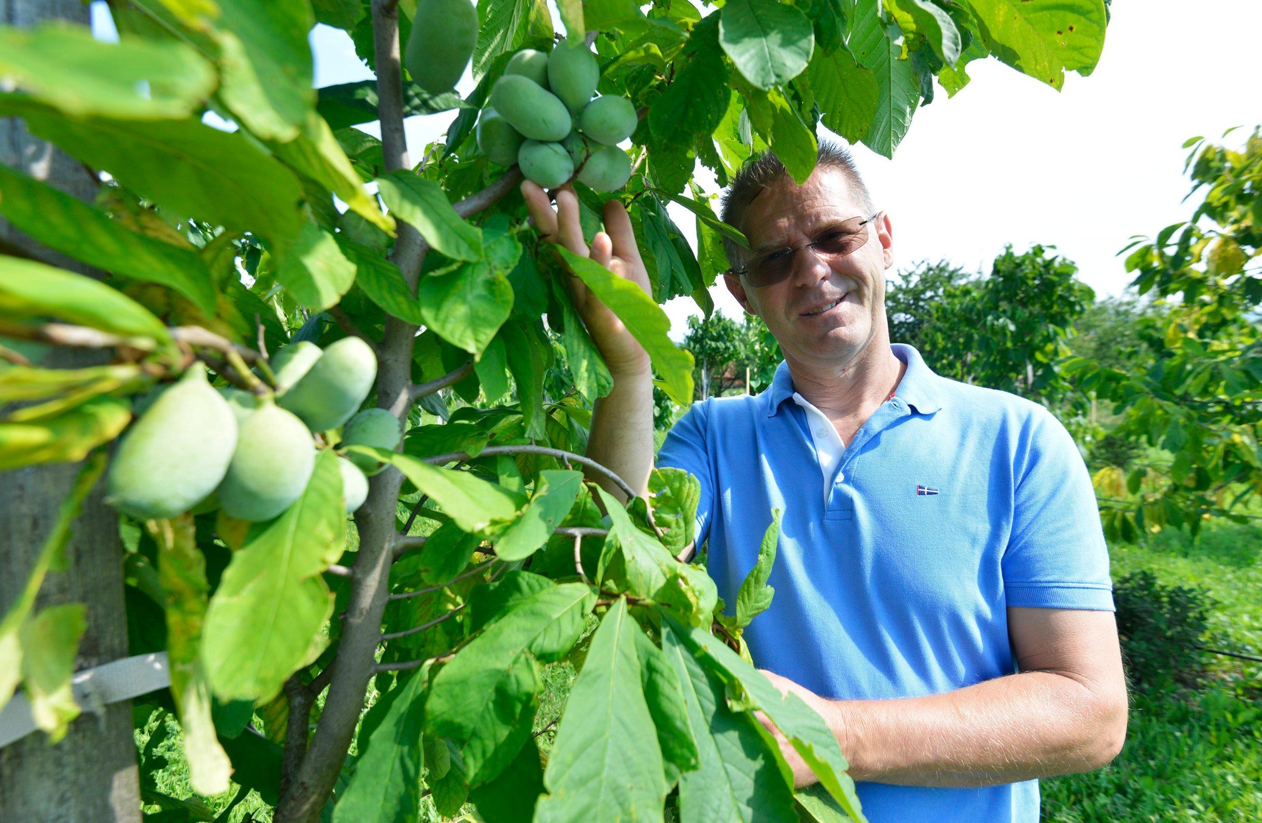 Ivan Šulog uzgaja indijanske banane