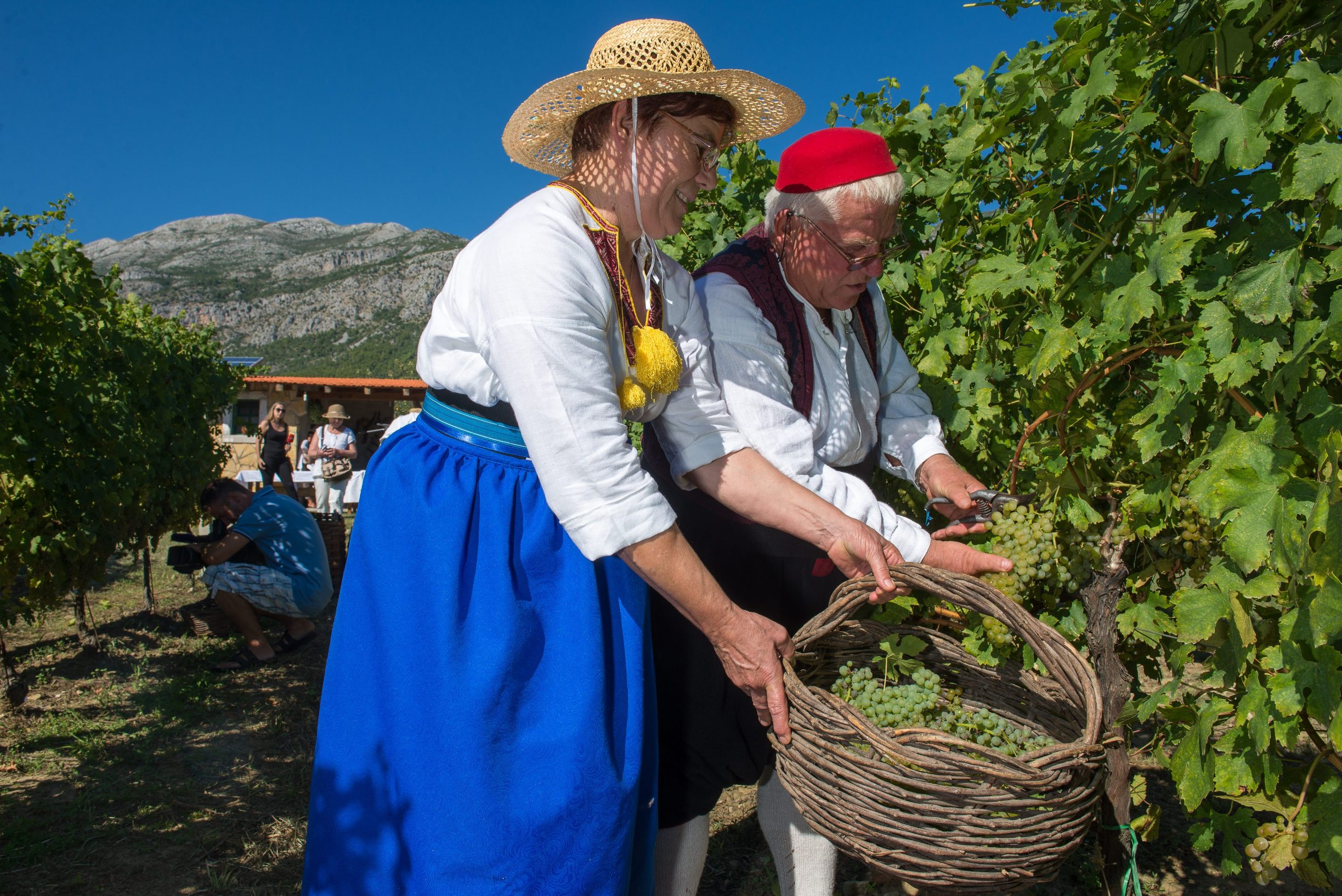 Agroturizam Konavle pozvao je sve zainteresirane na trganje ili berbu grozdja u vinogradu OPG-a Ive Karamana u Pridvorju