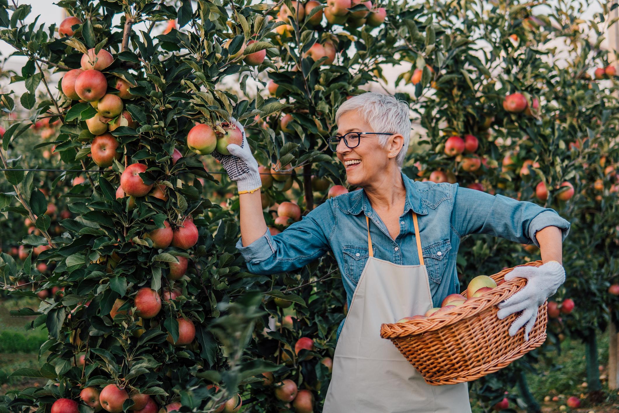Jabuke i orasi samo su neke od namirnica koje je dobro konzumirati kod ovakvog zdravstvenog stanja.