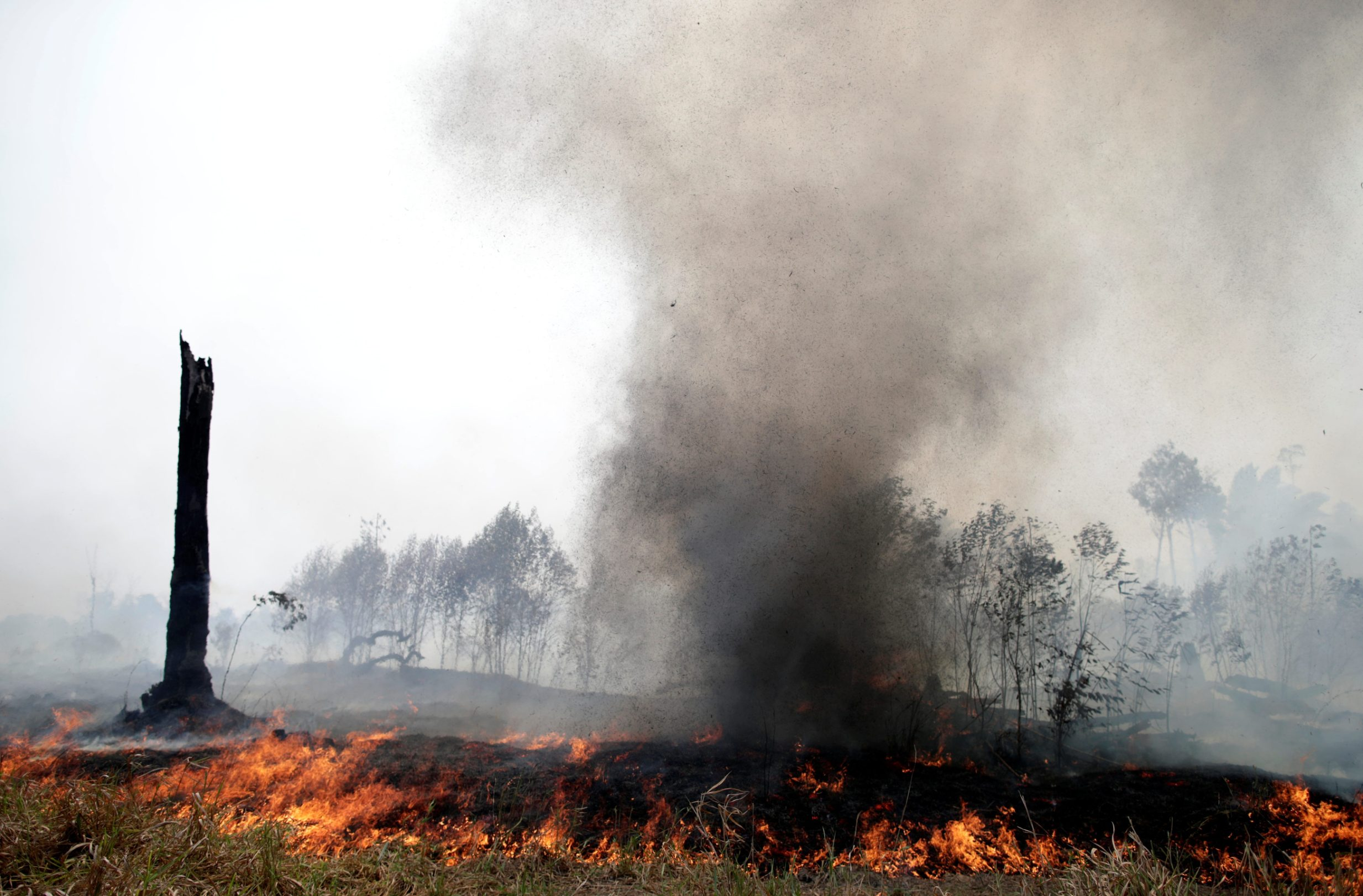 2019-08-24T194322Z_1078212356_RC130FFBEF50_RTRMADP_3_BRAZIL-ENVIRONMENT-WILDFIRES