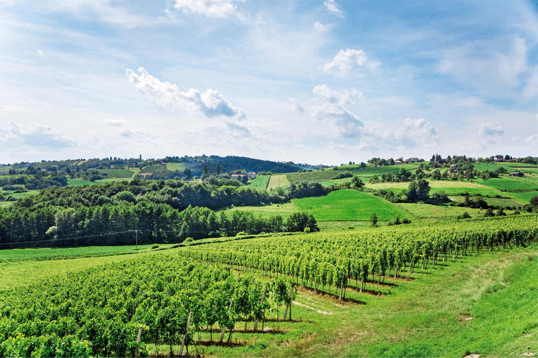 Pejzaž koji osvaja: vinorodni brežuljci na nadmorskoj visini od 300 metara