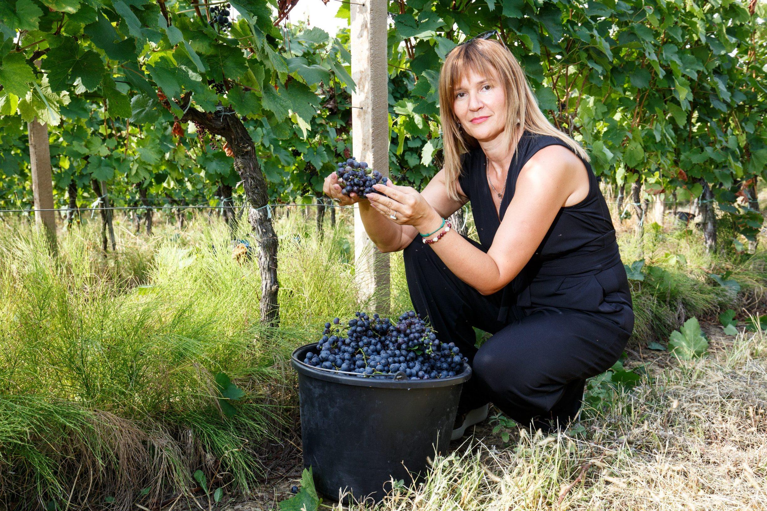 Fericanci, 290819. Reportaza s berbe grozdja u vinogradima Feravina. Na fotografiji: Janette Simic voditeljica marketinga. Foto: Vlado Kos / CROPIX