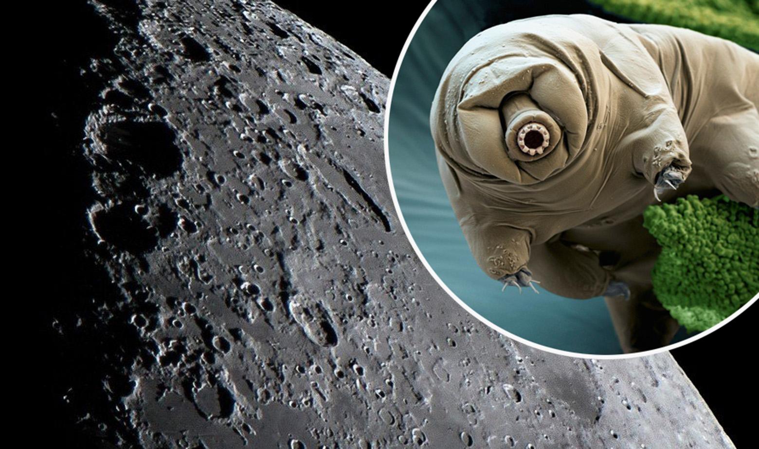 Ilustracija, dugoživac i površina Mjeseca