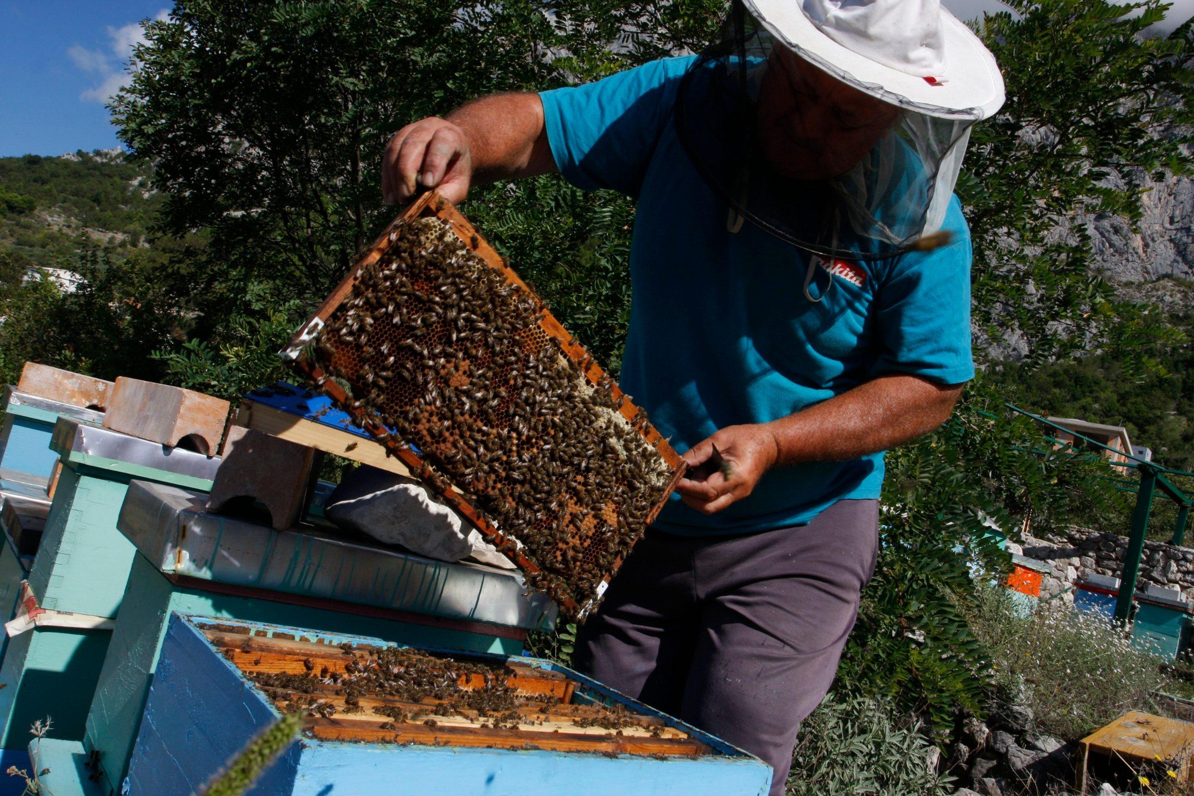 Prema podacima iz Evidencije pčelara i pčelinjaka Hrvatska ima više od 8 tisuća pčelara ipreko 415.000 proizvodnih pčelinjih zajednica, a godišnja proizvodnja meda i drugih pčelinjih proizvoda je veća od 8.000 tona.