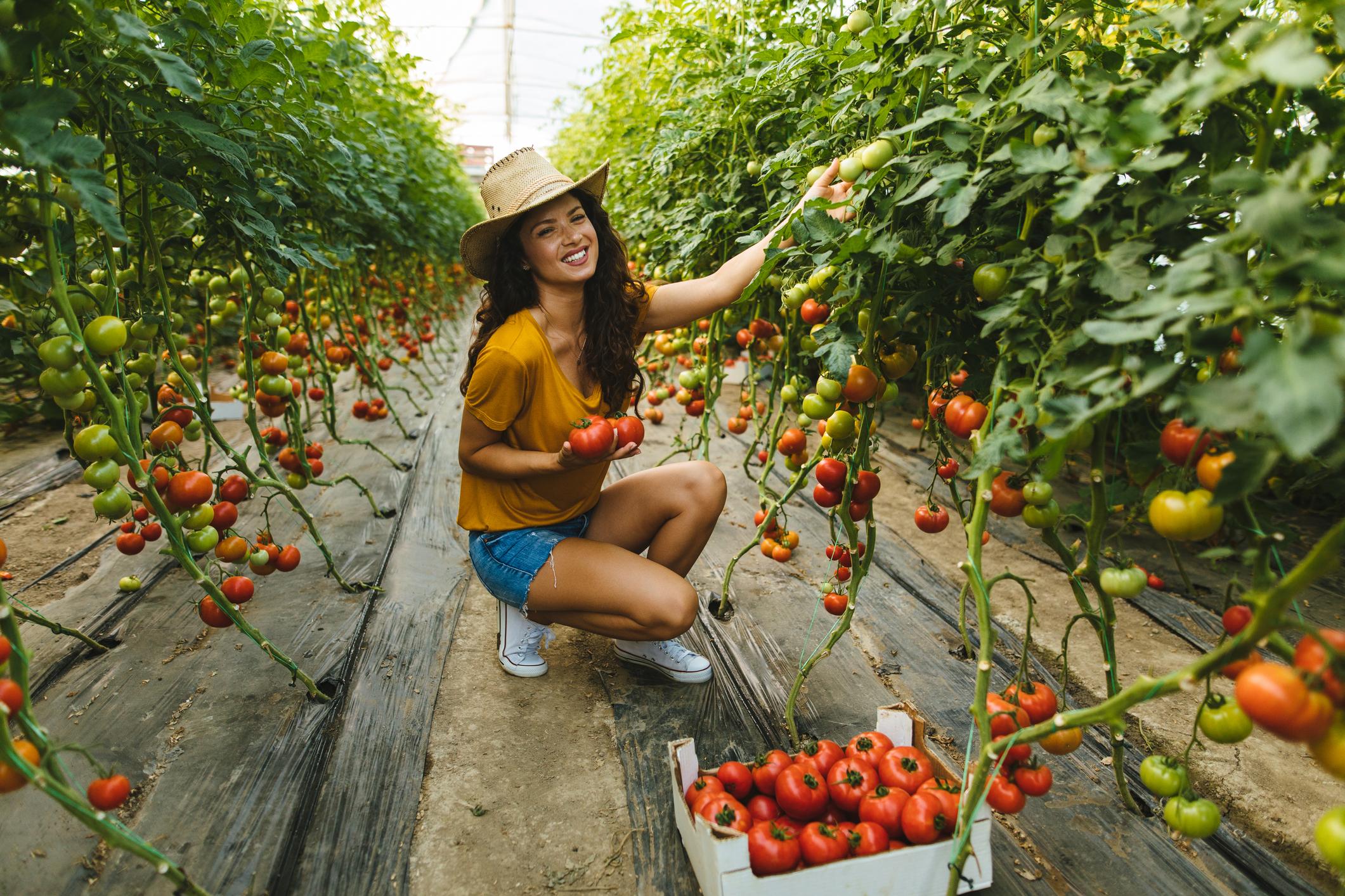 Pojedini istraživači tvrde da i osobe s krvnom grupom B ne bi trebali pretjerivati s konzumacijom rajčica.