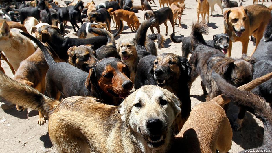Psi u jednom prihvatilištu za životinje u Nišu