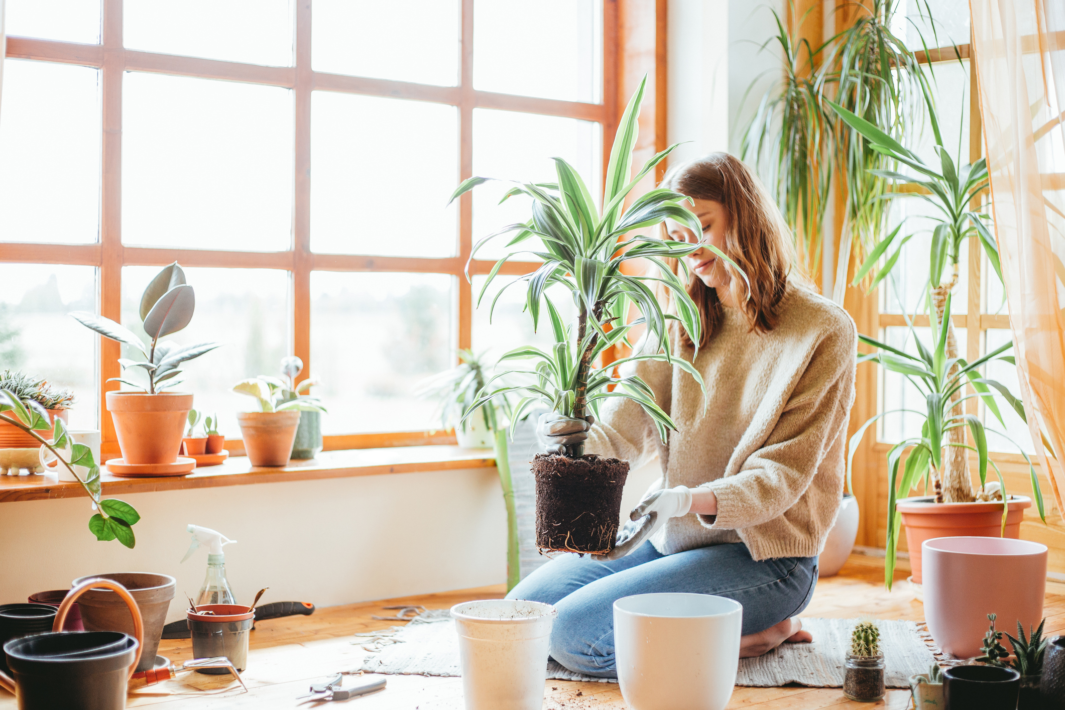 Ove biljke snažni su eliminatori toksina i čine dom ugodnijim.
