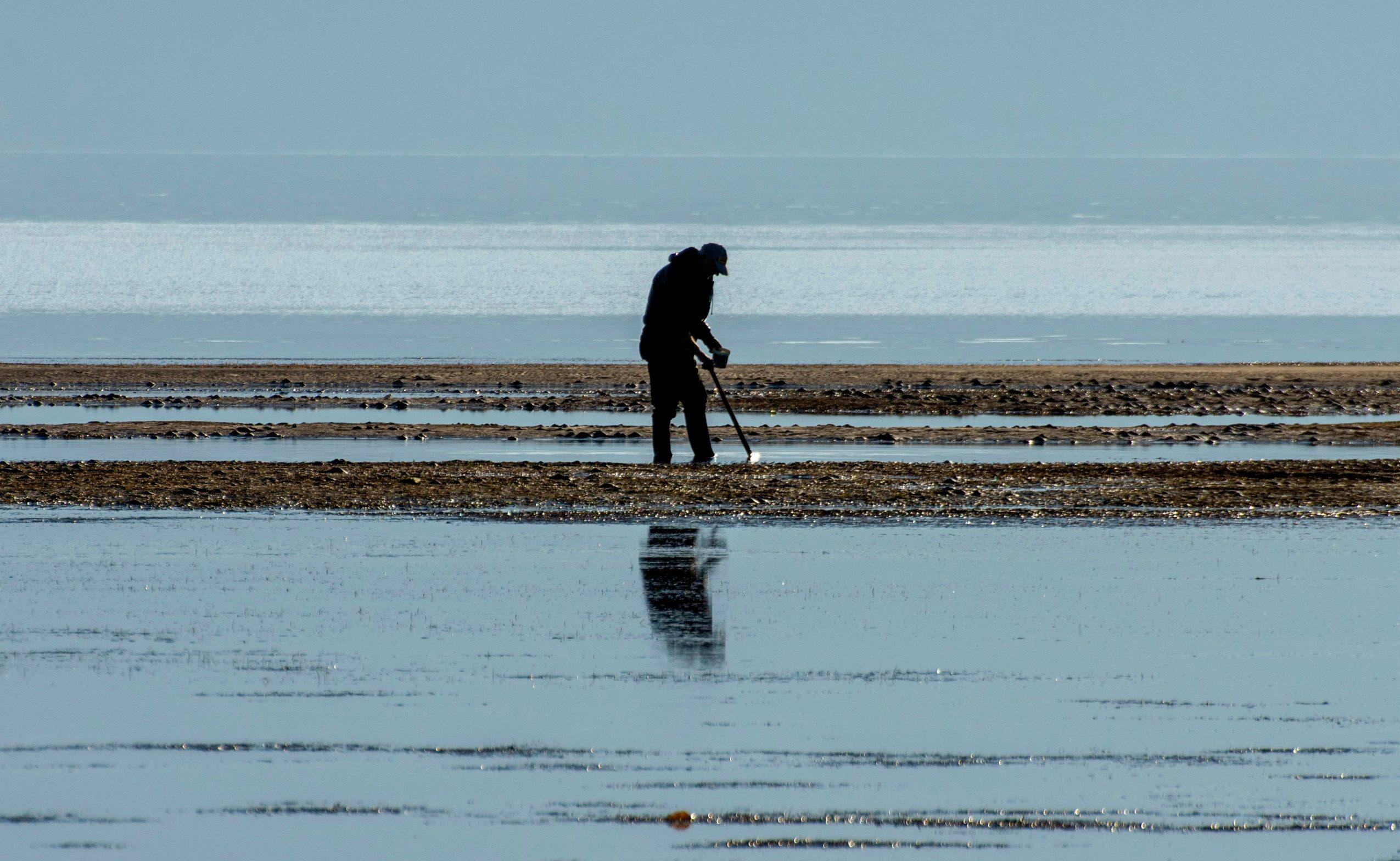Usce Neretve, 040120. Pomor Periski na Uscu Neretve. U pojedinim dijelovima Mediterana periska ubrzano izumire zbog parazitske bolesti, koja je zahvatila i periske na uscu Neretve. Periska je inace zasticena vrsta ciji je izlov, sakupljanje te trgovna strogo zabranjena. Foto: Denis Jerkovic / CROPIX