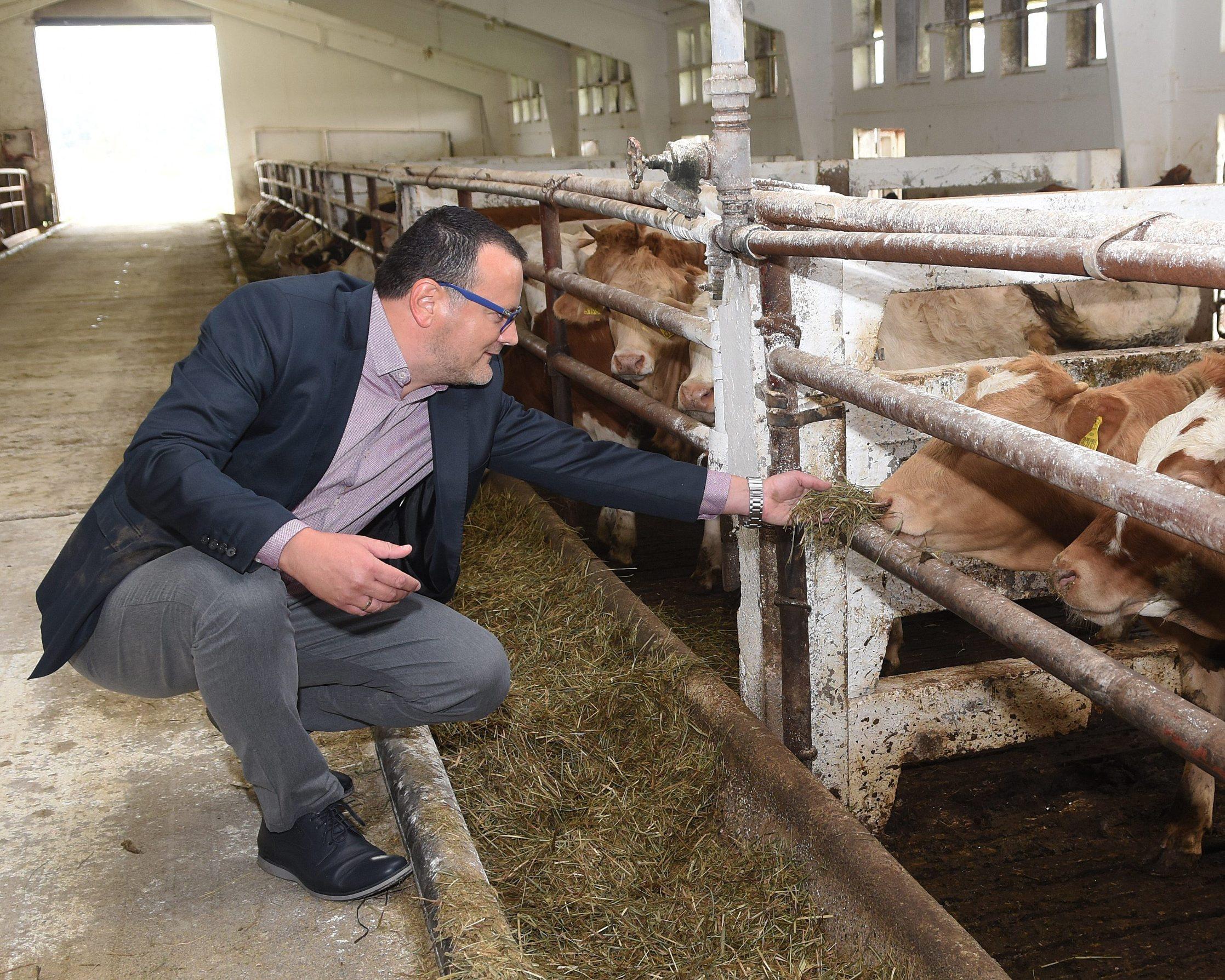 Karlovac, 220920. Izgradnja nove farme PPK Karlovac je pri kraju. Farma se nalazi u Sumbaru pokraj Recice nedaleko od Karlovca. Na fotografiji: Igor Miljak, predsjednik uprave PPK. Foto: Robert Fajt / CROPIX