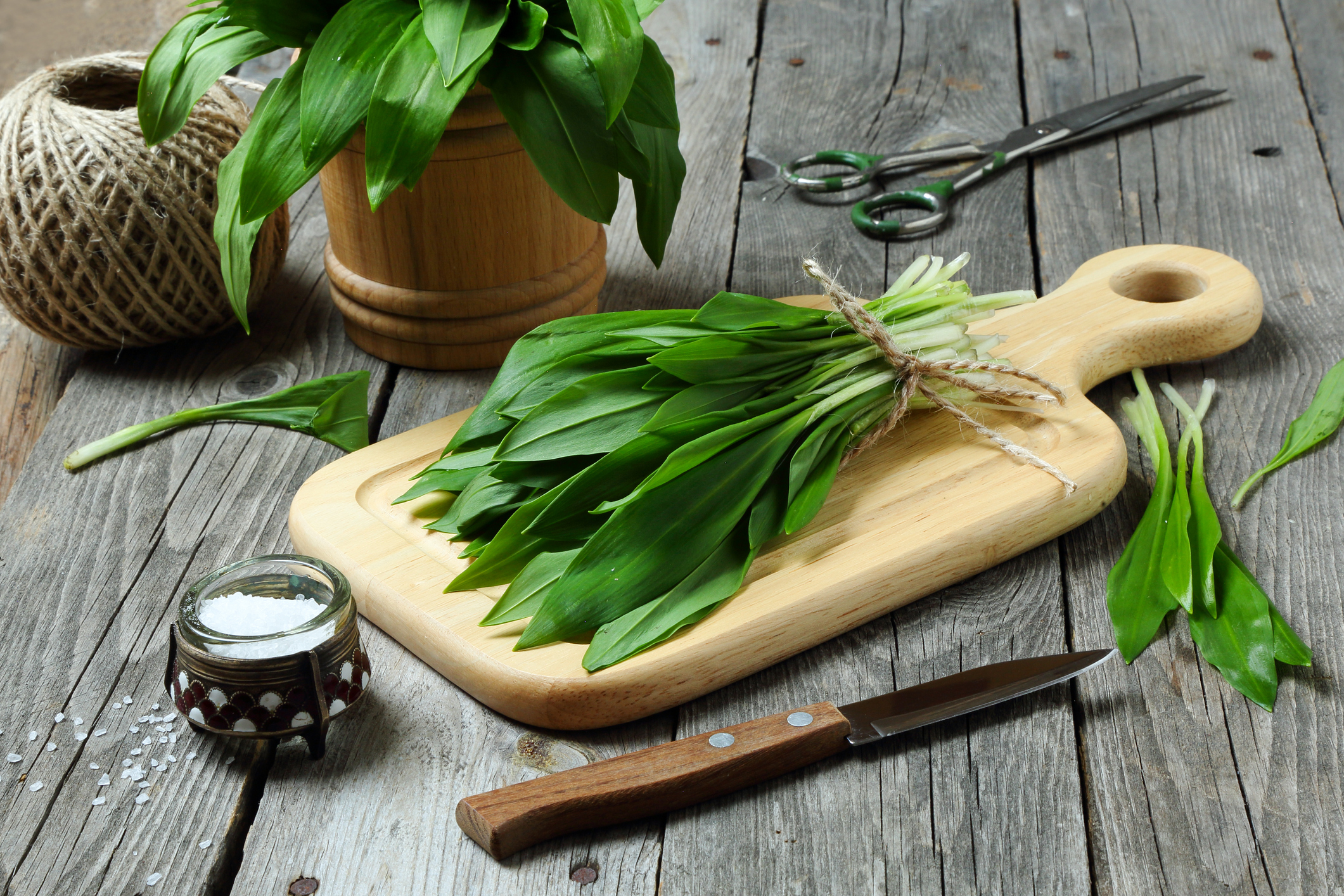 PRamson or wild garlic on a cutting board on a gray table