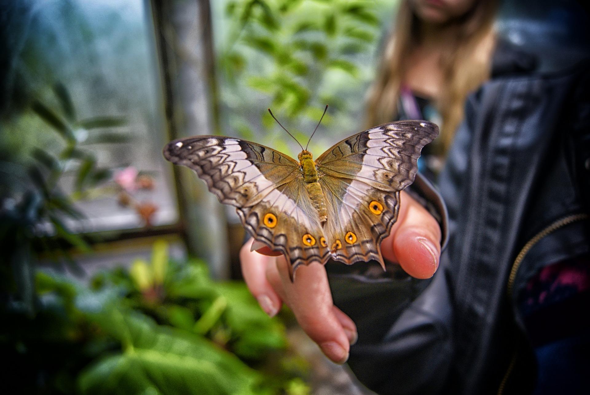 Ozbiljno upozorenje čovječanstvu: Pred izumiranjem pola miliona vrsta insekata