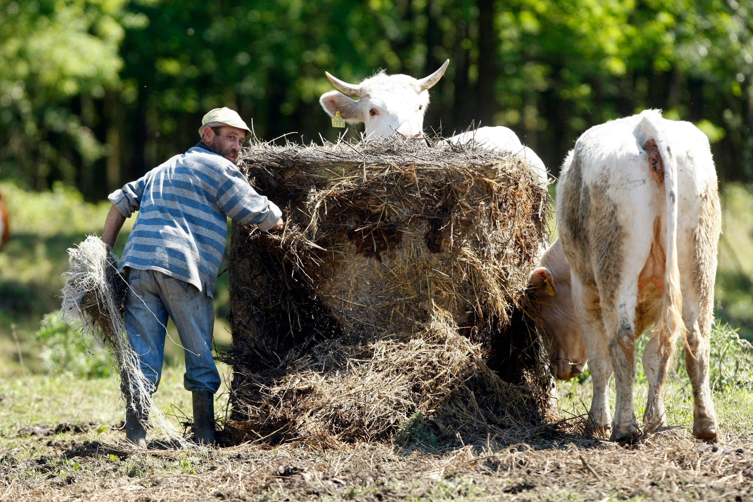 Ilustracija, poljoprivrednici i uzgajivači