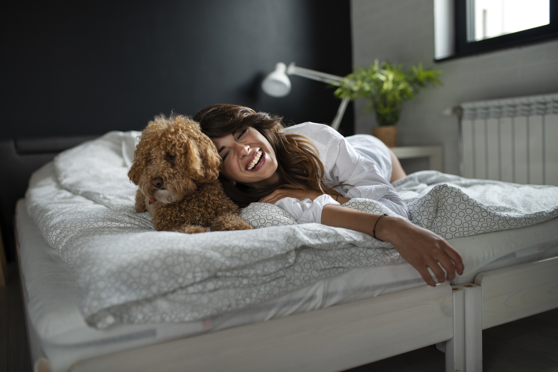 Young woman and her dog of apricot puddles meet in the morning in bed