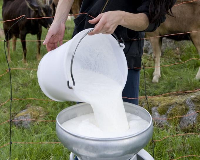 mlijeko ilustracija