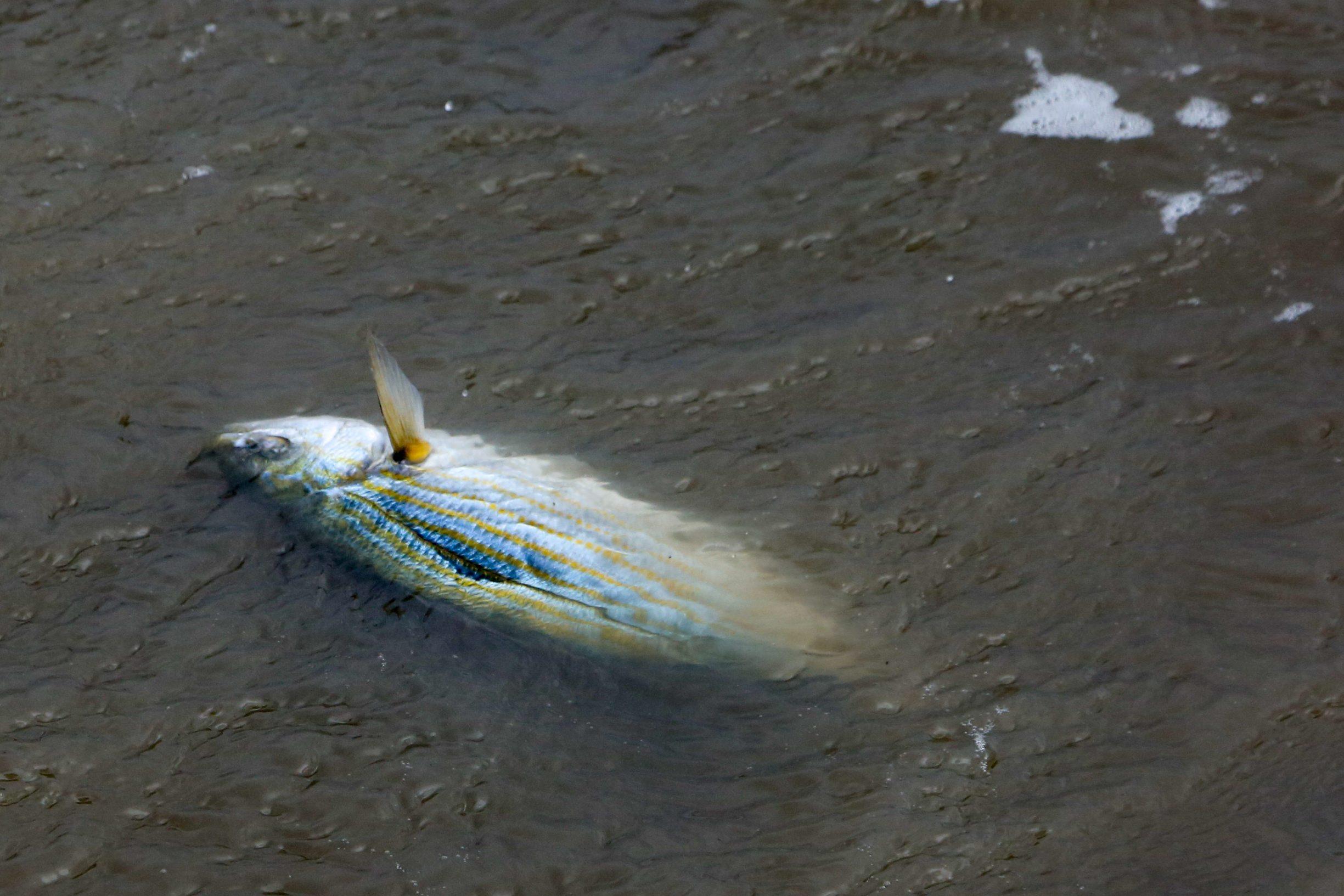 Jaka bura izbacuje ribu na obalu