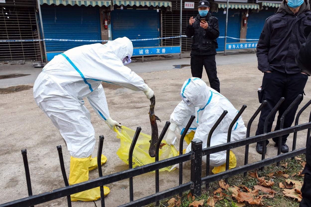 Medicinsko osoblje hvata odbjeglog velikog daždevnjaka na području tržnice Huanan koja je zatvorena zbog povezanosti s epidemijom koronavirusa