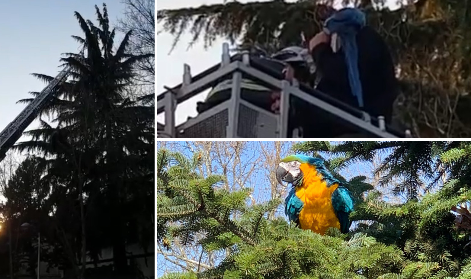 Spašavanje papagaja Jacka