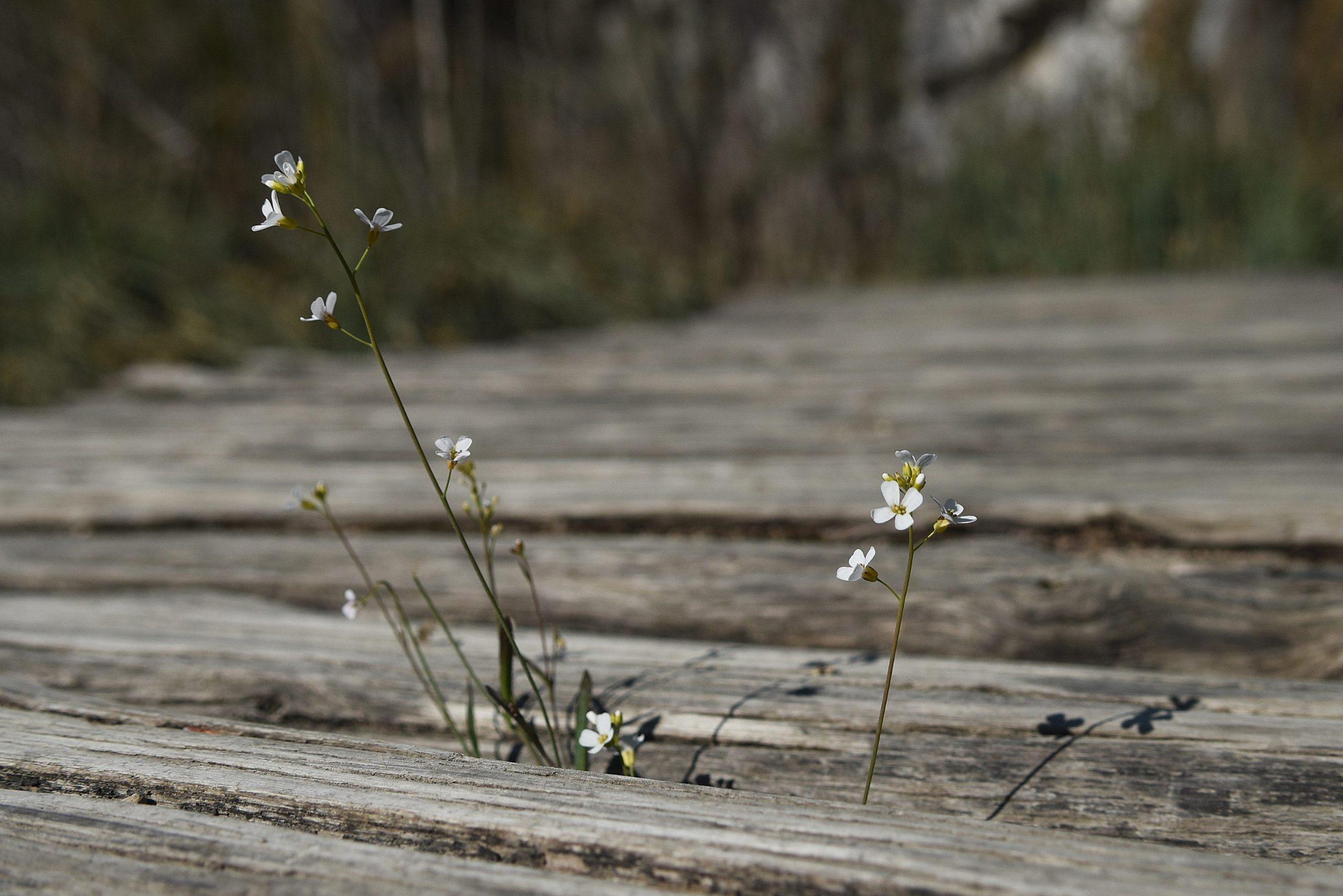 Plitvicka Jezera, 240420. Prvi put u svojoj povijesti Nacionalni park Plitvicka jezera zatvoren je za posjetitelje u sezoni. Na fotografiji: Setnica u nacionalnom parku. Foto: Robert Fajt / CROPIX