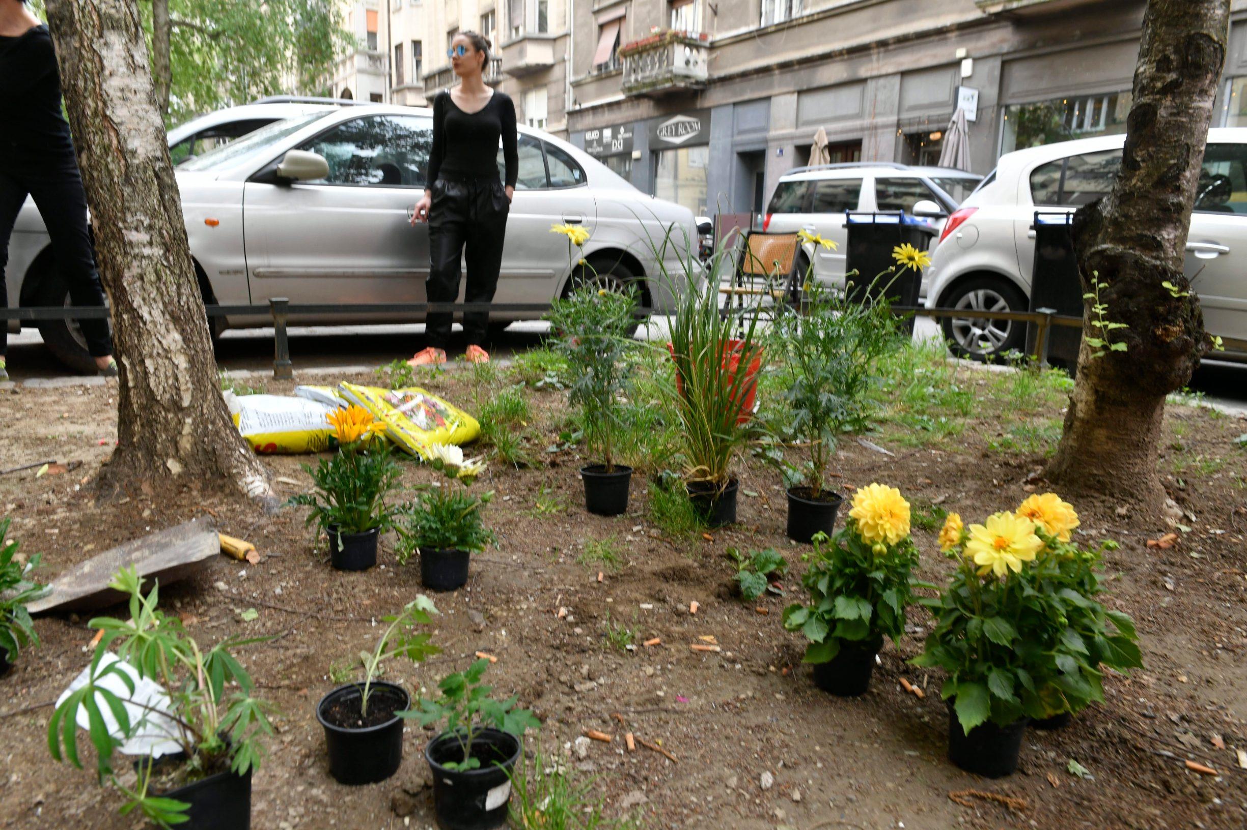 Zagreb, 140520.  Tomasiceva ulica. Gradjanska akcija zasadiivanja cvijeca protiv odluke Grada da kazni ljude koji samoinicijativno sade cvijece po zelenim povrsinama.  Foto: Goran Mehkek / CROPIX