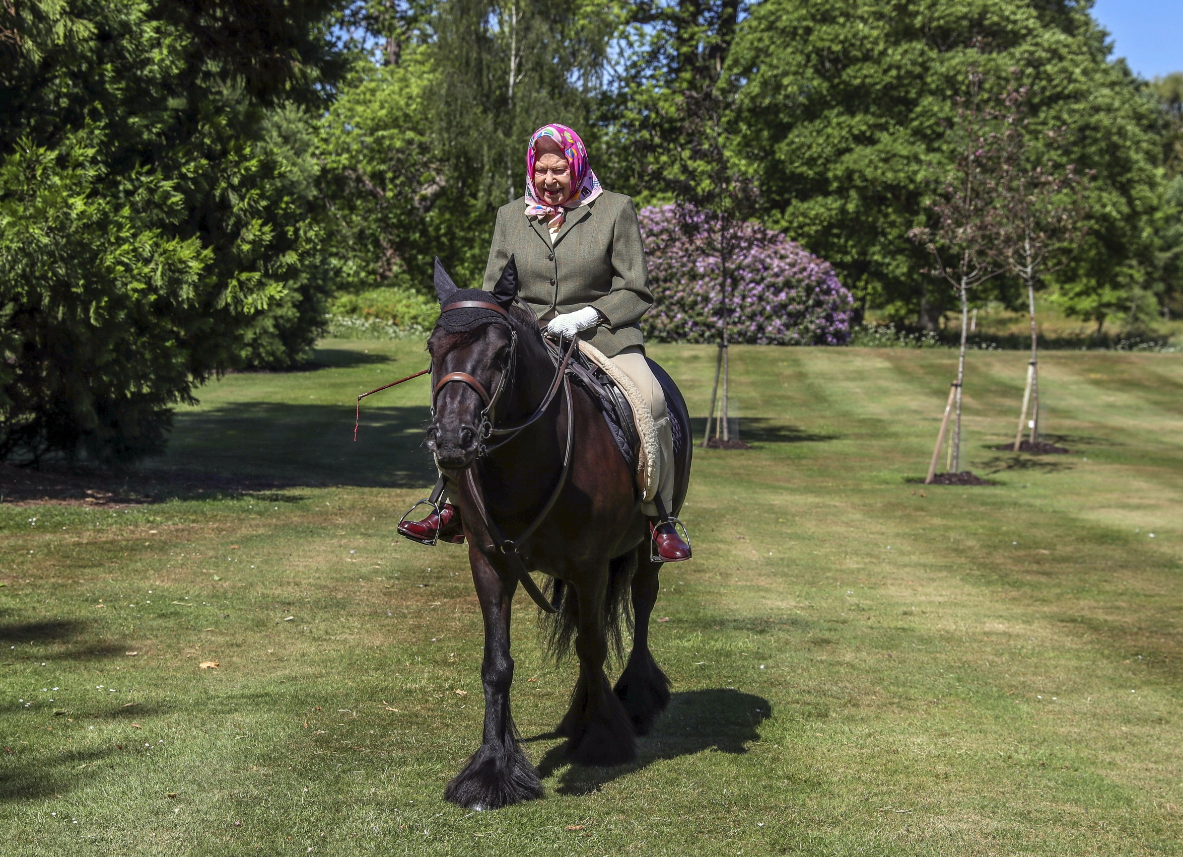 Queen Elizabeth II rides Balmoral Fern, a 14-year-old Fell Pony, in Windsor Home Park over the weekend. The Queen has been in residence at Windsor Castle during the coronavirus pandemic.,Image: 524413447, License: Rights-managed, Restrictions: FILE PHOTO, Model Release: no