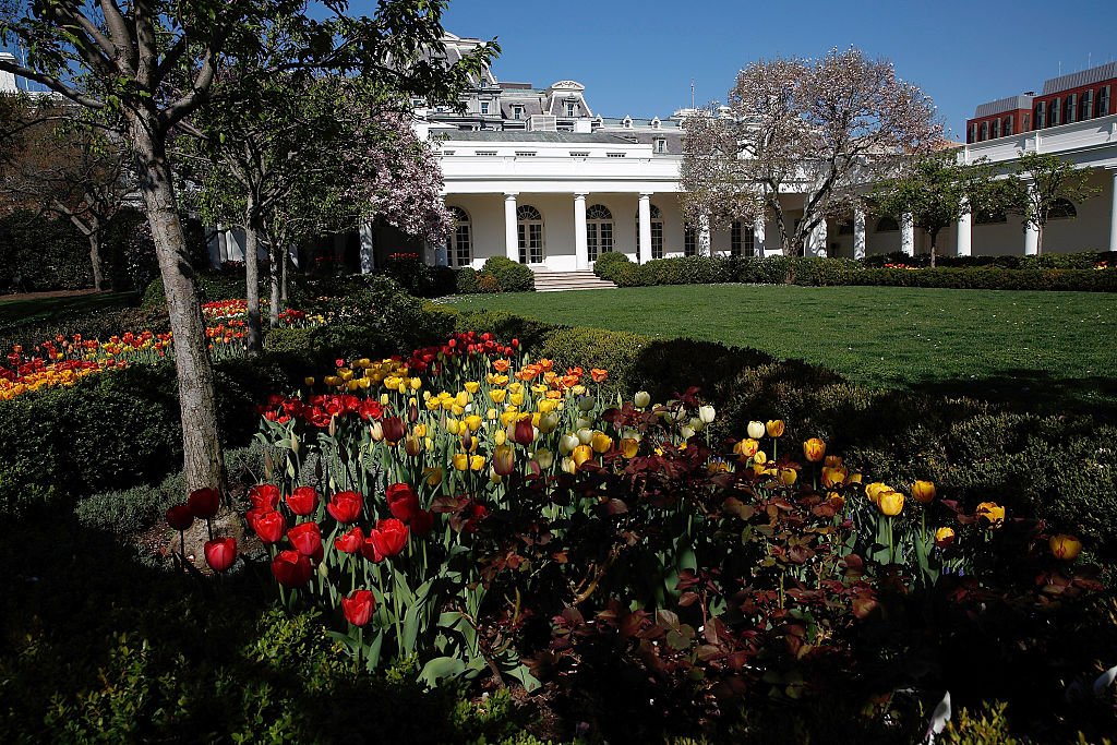 WASHINGTON, DC - APRIL 16:  Flowers bloom in the Rose Garden outside the West Wing of the White House on April 16, 2015 in Washington, DC.  Spring flowers, including cherry blossoms, are a popular attraction in Washington every Spring. (Photo by Win McNamee/Getty Images)