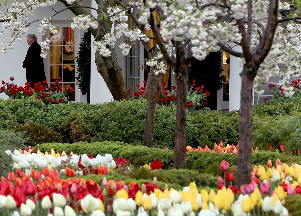WASHINGTON, DC - APRIL 16: Flowers are in bloom in the Rose Garden as U.S. President Donald Trump walks out of the Oval Office toward Marine One while departing from the White House, on April 16, 2018 in Washington, DC. President Trump is traveling to Hialeah, Florida where he will participate in a small business roundtable discussion on tax cuts.  (Photo by Mark Wilson/Getty Images)