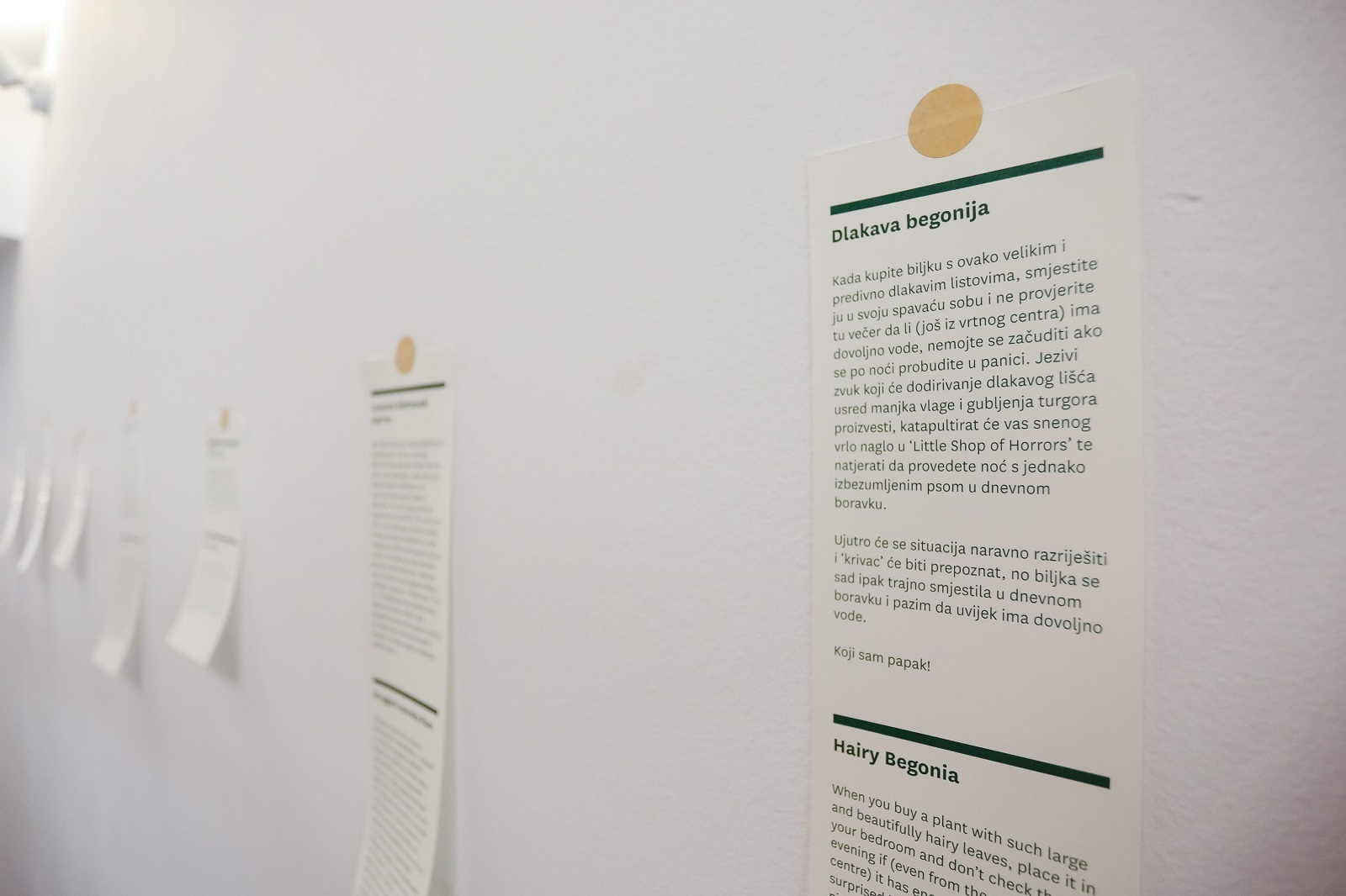 Zagreb, 290720. Cirilometodska ulica. Hotel za biljke otvoren je u sklopu Muzeja prekinutih veza.  Na fotografiji: zelene price.  Foto: Marko Todorov / CROPIX