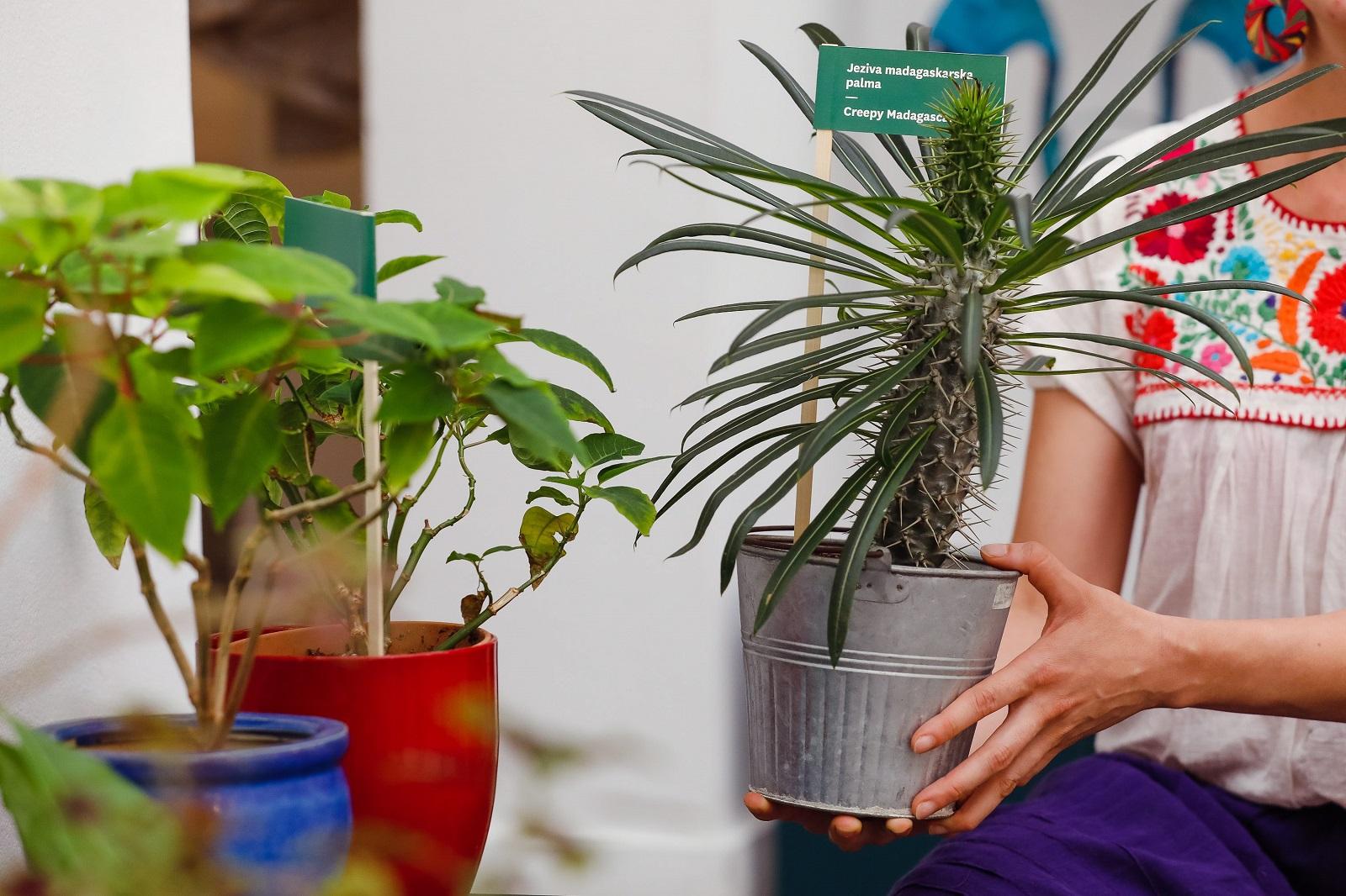 Zagreb, 290720. Cirilometodska ulica. Hotel za biljke otvoren je u sklopu Muzeja prekinutih veza.  Na fotografiji: biljke.  Foto: Marko Todorov / CROPIX