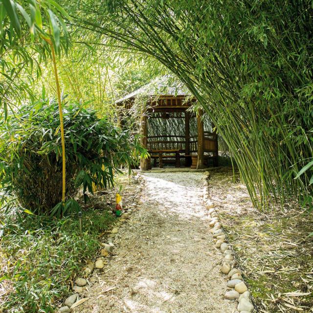 bambus34-100619_1
