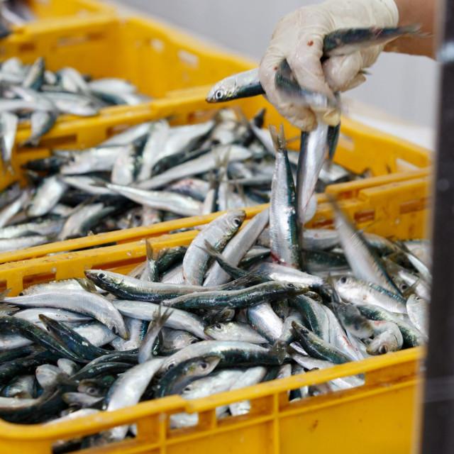 Važna pomoć ribarima