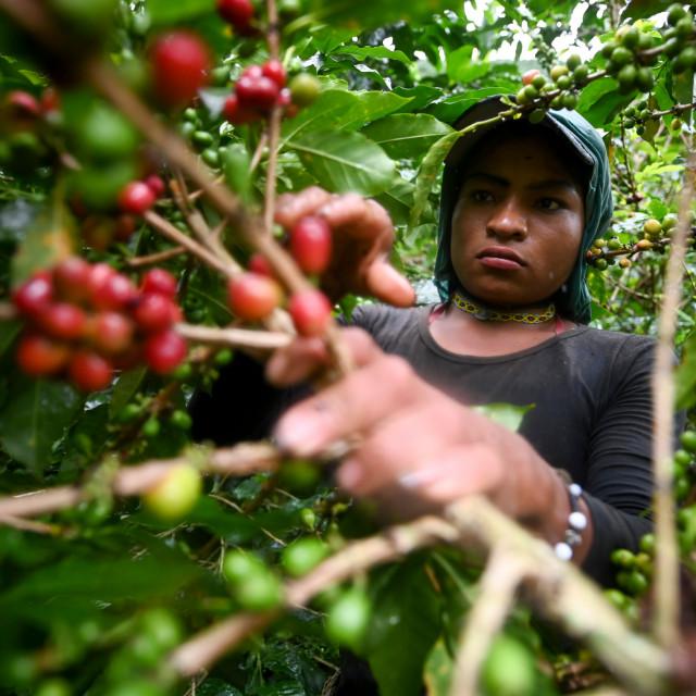 Plantaža kave, Kolumbija