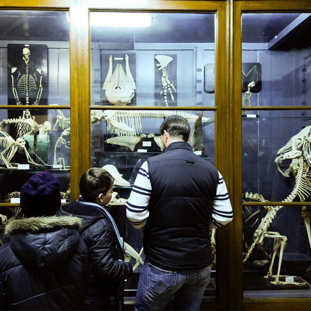 prirodoslovni_muzej8-310114