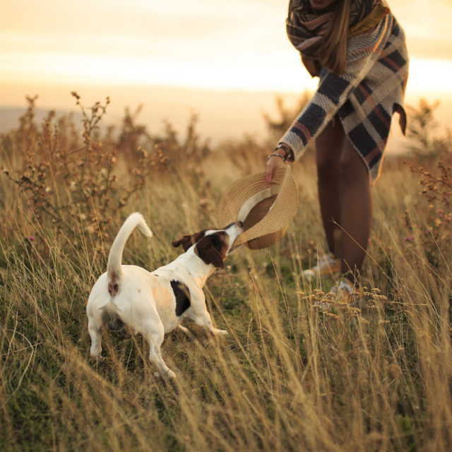 Poput tinejdžera, čija su tijela preplavljena hormonima i čiji mozak tada doživljava velike promjene, psi u adolescenciji mogu prestati slušati svoje vlasnike