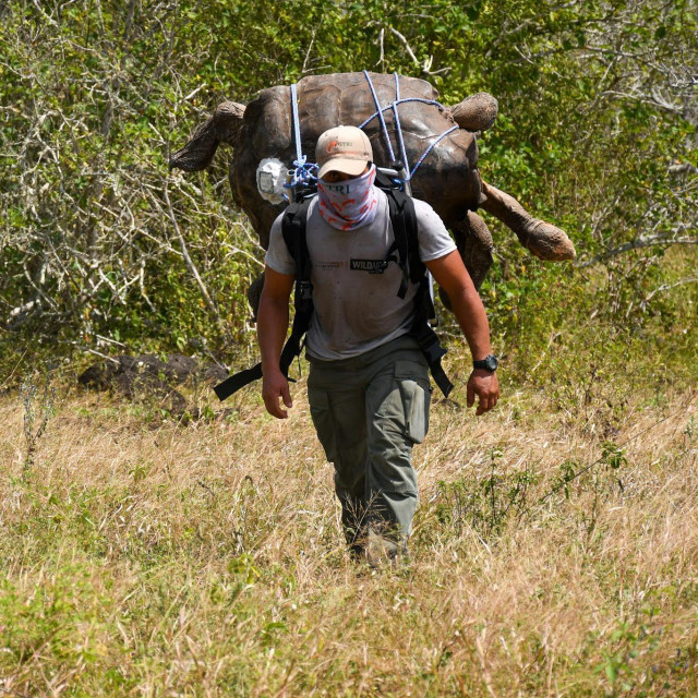 Rendžer Nacionalnog parka Galapagos prenosi Diega