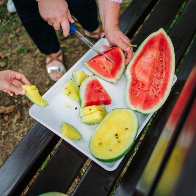 Opg Karas na kojem se bave uzgojem žutih lubenica.