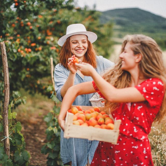 Zbog velike količine antioksidanata i beta-karotena široko se koristi u kremama i kozmetičkim proizvodima