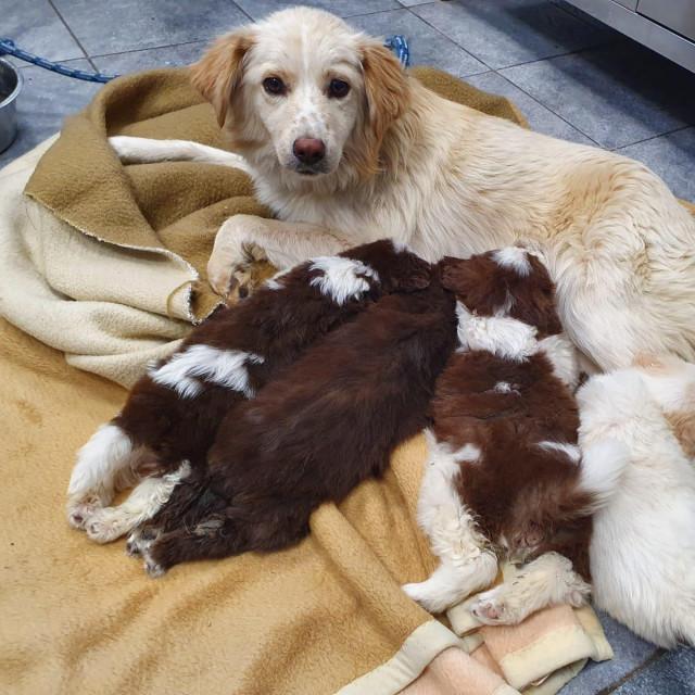 kujica sa štencima
