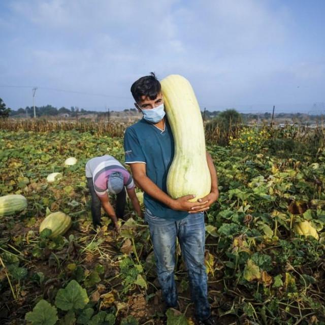 Poljoprivrednik u Izraelu