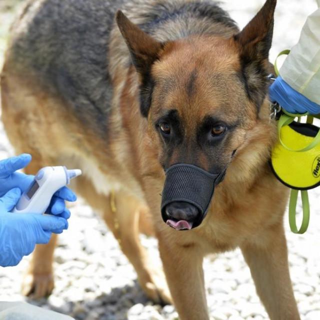Ilustracija: Njemački ovčar na rutinskom veterinarskom pregledu.