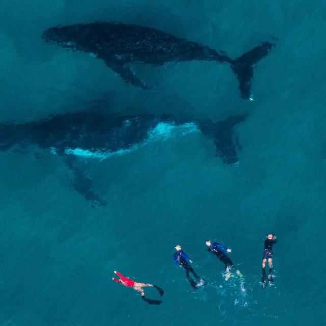 Ronilački izlet kod grebena Ningaloo (ilustracija)