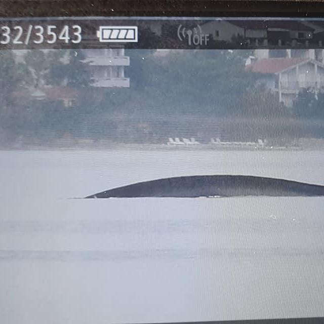 Institut Plavi svijet locirao je kita u Velebitskom kanalu