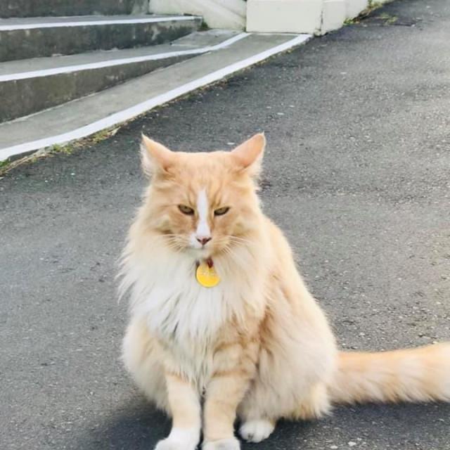 Mačak Mittens