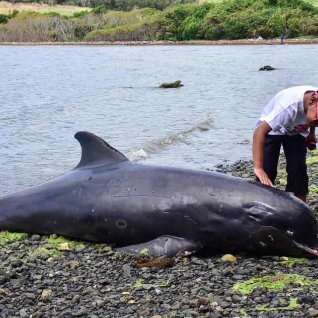 Uginuli delfin pronađen na obali Mauricijusa