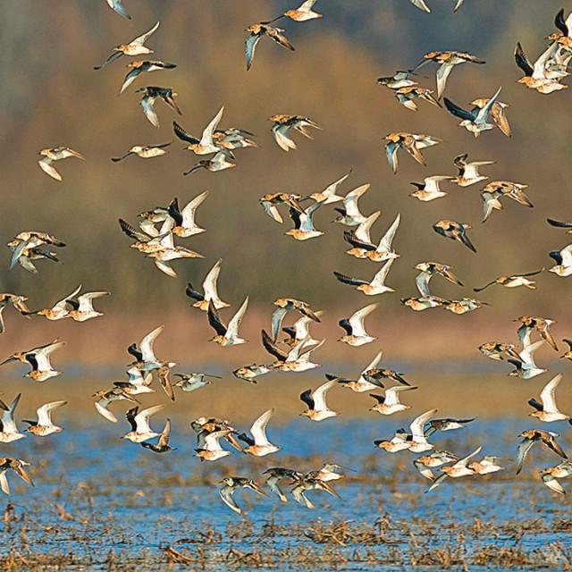 Ornitološki rezervat Krapje đol najstariji je u Hrvatskoj.